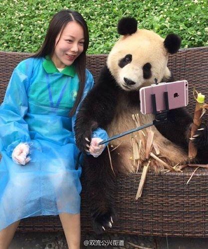 女子力が高いパンダ2