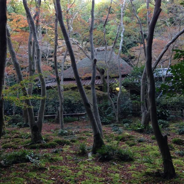 今年2015の京都の紅葉はガッカリに関連した画像-03