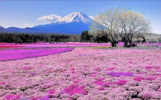 美しい日本に関連した画像-04