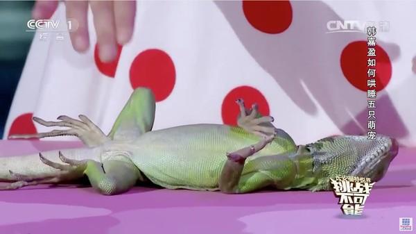 動物を次々と催眠術にかけていく中国の天才少女に関連した画像-04