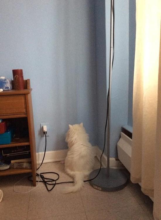 ネコには特別な力が宿っているに関連した画像-07