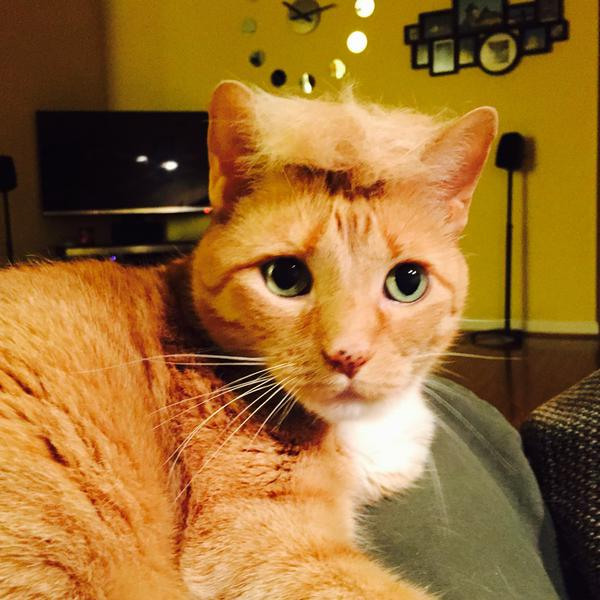 「猫かつら」装着例に関連した画像-06