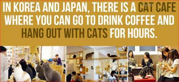 日本の知られざる衝撃的な事実に関連した画像-10