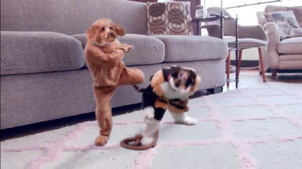飼い主の居ぬ間に「犬と猫」がカンフー戦争に関連した画像-04
