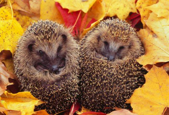 秋を楽しむ動物たちに関連した画像-01