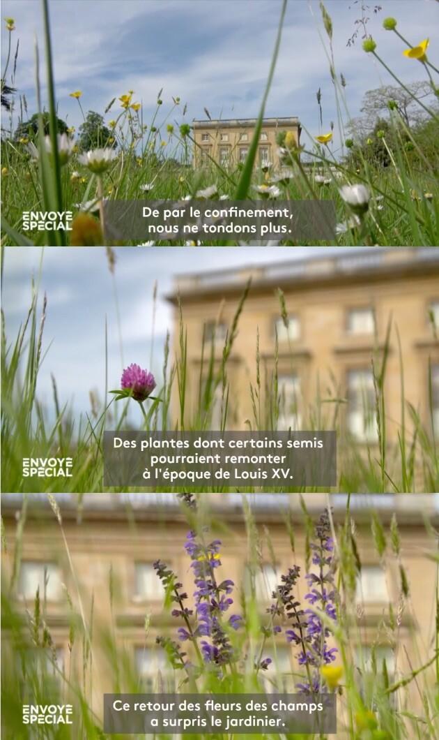 マリー・アントワネット ベルサイユ宮殿 小トリアノン宮殿  に関連した画像-02