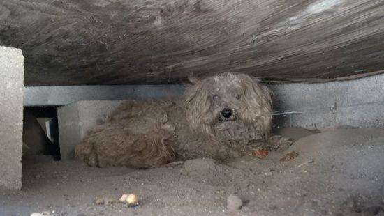 床下で1年間…亡き主人を一人待ち続ける犬を救出に関連した画像-01