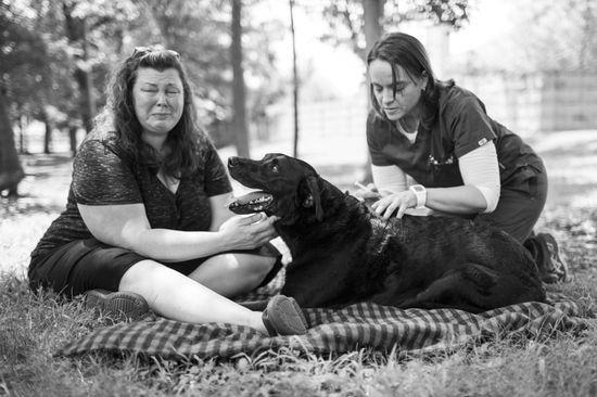 愛犬Dukeyとの最期の日を記録したアルバムに関連した画像-16