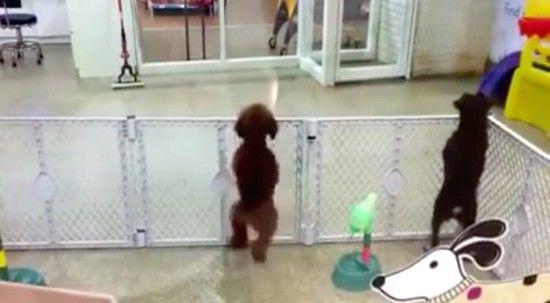 飼い主を見つけて興奮するワンちゃんに関連した画像-01