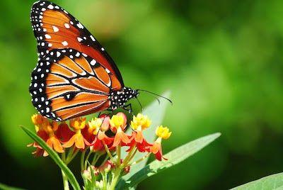 蝶の妖精に関連した画像-01