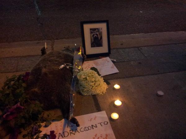 街中で死んだアライグマに、カナダ人が続々と追悼に関連した画像-06