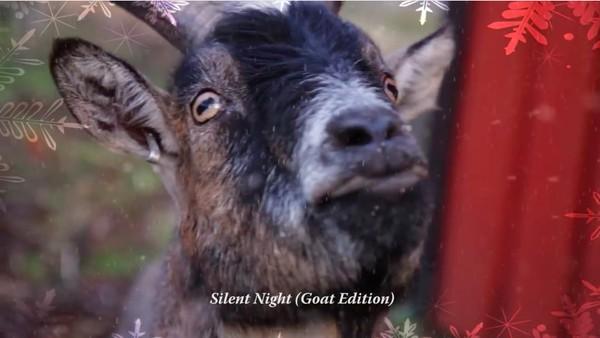 ヤギに「クリスマスソング」を歌わせたに関連した画像-02