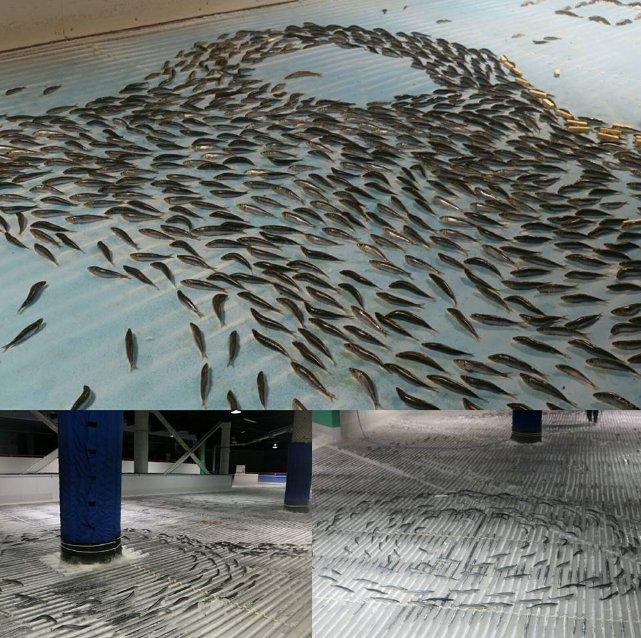 魚氷漬けスケートリンクに関連した画像-02