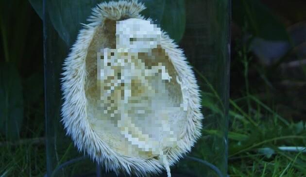 ハリネズミの骨格に関連した画像-01