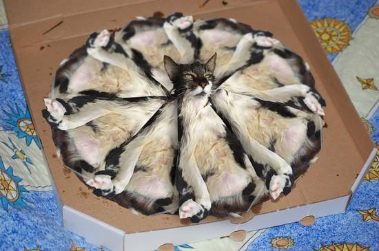 """""""おっさん化""""したネコに関連した画像-08"""