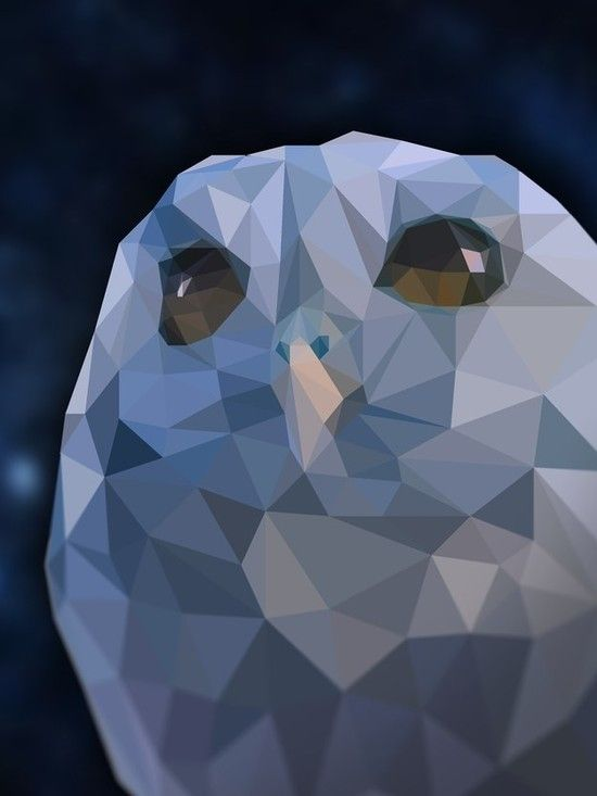 「宇宙の瞳」を持つ盲目のフクロウに関連した画像-08