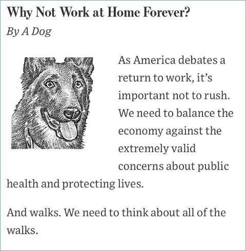 ネコとイヌが経済活動再開の議論に関連した画像-04