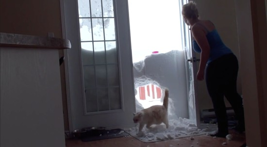 雪の壁を破壊して家に入るネコに関連した画像-05