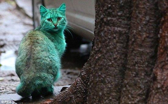 全身緑色の猫に関連した画像-04