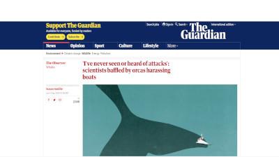 シャチ ジブラルタル海峡 に関連した画像-02