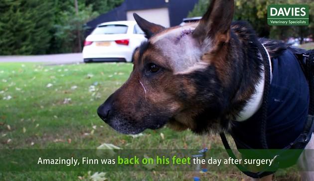 警察犬フィン君に関連した画像-07