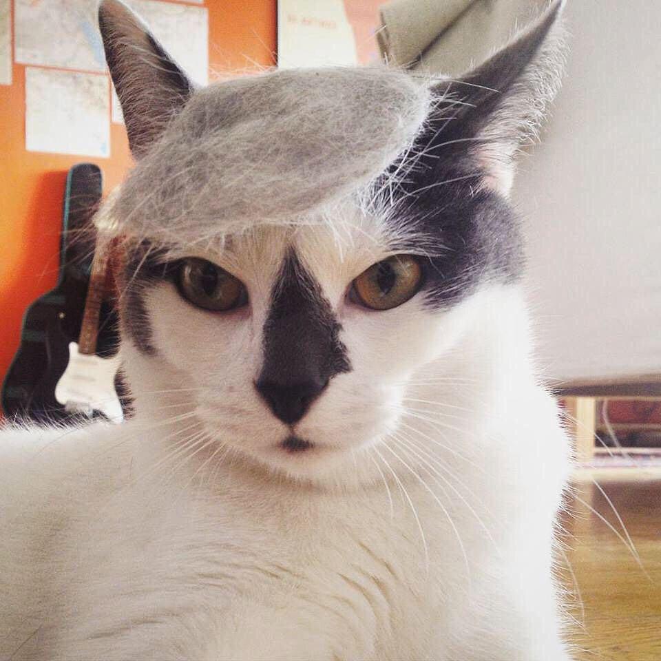 「猫かつら」装着例に関連した画像-11