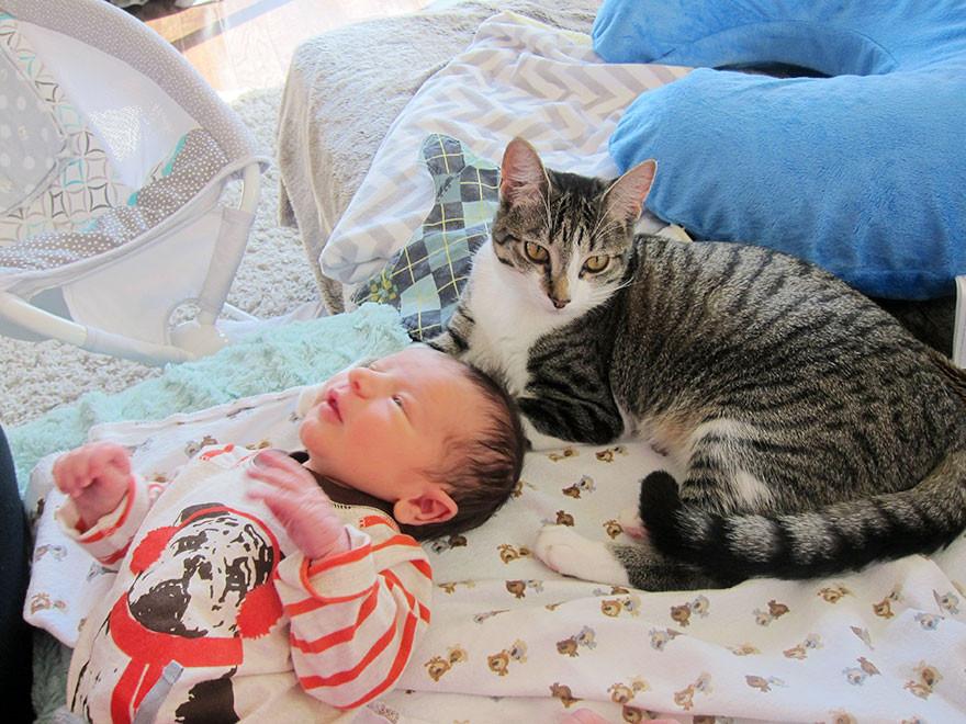 初めて人間の赤ちゃんを見たネコの反応に関連した画像-05