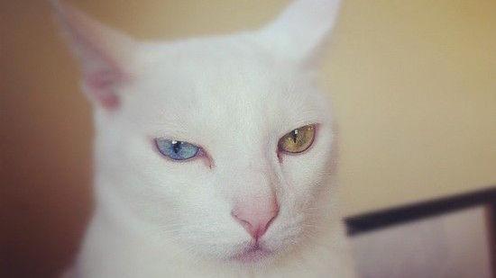 ネコたちが教えてくれる、月曜日のツラさに関連した画像-08