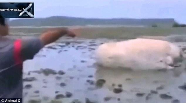 津波で打ち上がった「謎の巨大生物」に関連した画像-03