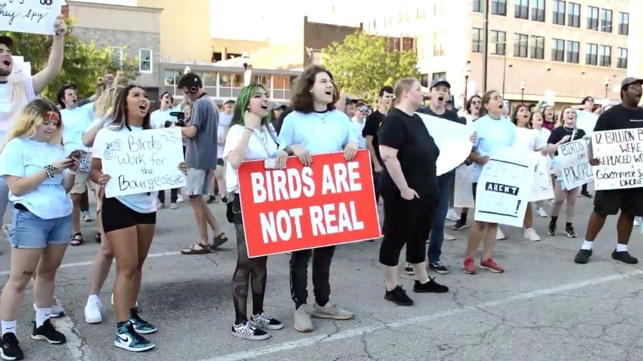 鳥は本物でない アメリカ ドローン カモメ