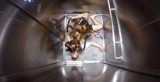 スパイダードッグに関連した画像-03