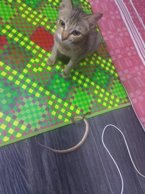 ネコがイヤホン噛みちぎりヘビをもってくるに関連した画像-03