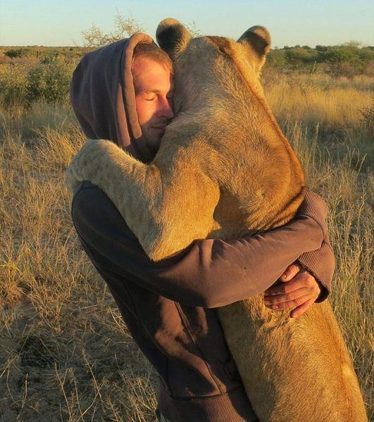 ライオンが愛情たっぷりに男性に抱きつくに関連した画像-03