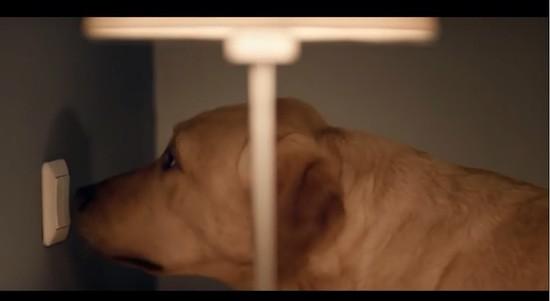 オランダロイヤル盲導犬財団に関連した画像-01