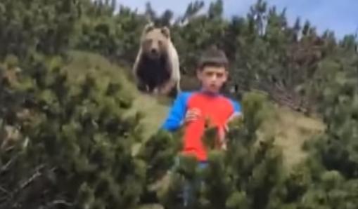 イタリア 熊 クマに関連した画像-01