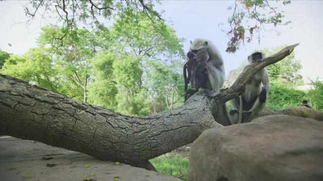 ラングールと猿ロボットに関連した画像-05