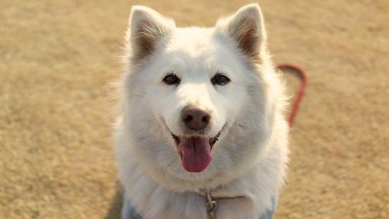 犬を飼うと分かる、その理想と現実に関連した画像-01