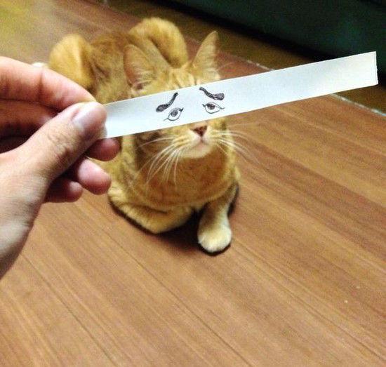 猫モンタージュに関連した画像-09