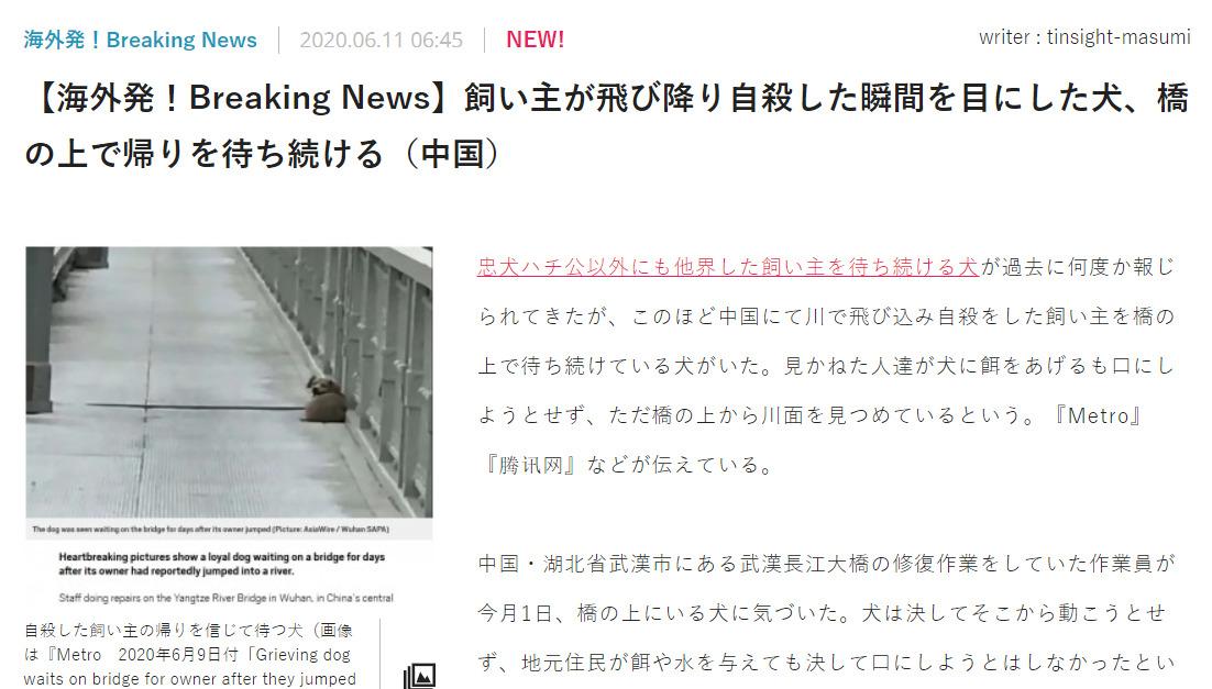 中国 飛び降り 犬に関連した画像-02