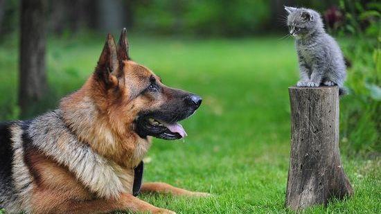 犬よりも猫の方が絶対に素晴らしいに関連した画像-01