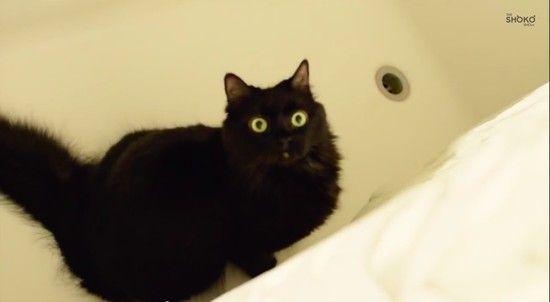 あなたを殺そうとしているネコに見られる、8つの行動パターンに関連した画像-04