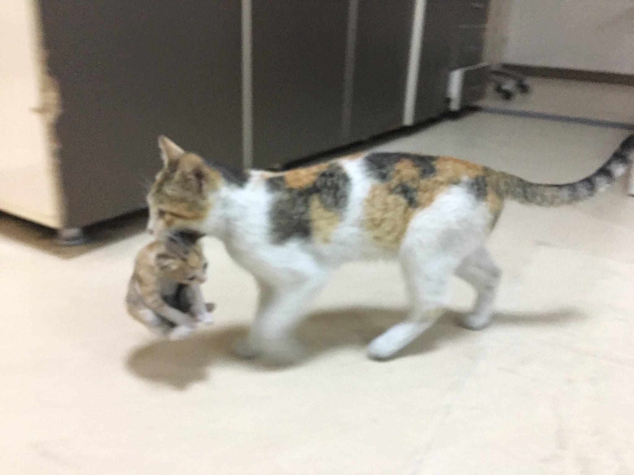 病院 子猫 病院 トルコに関連した画像-01