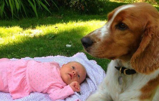 犬よりも猫の方が絶対に素晴らしいに関連した画像-14