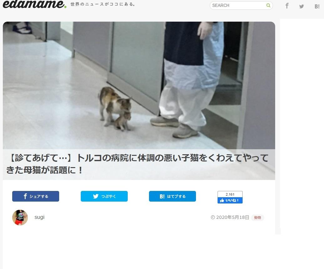 病院 子猫 病院 トルコに関連した画像-02