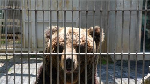 ロシア クマ 死亡に関連した画像-01