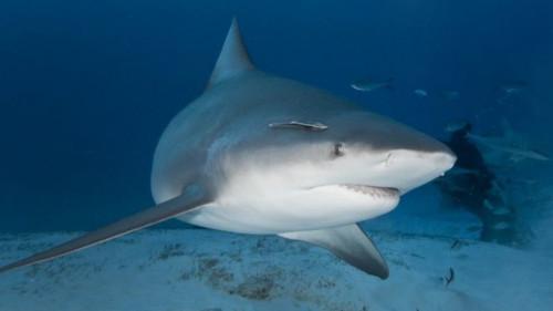 アメリカ 妊娠 サメに関連した画像-01