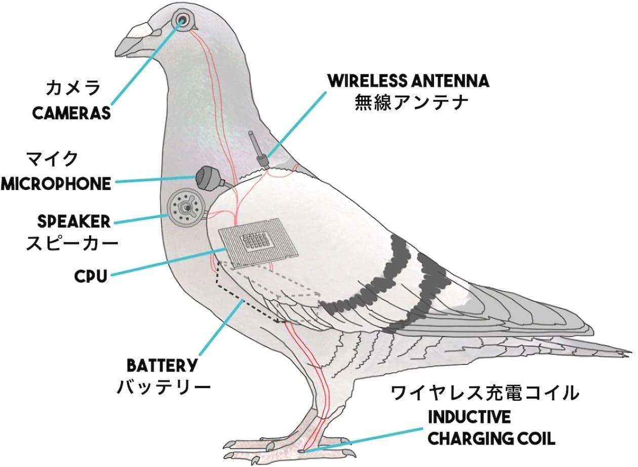 鳥 アメリカ 陰謀論 ドローン BirdsArentReal