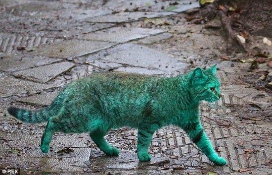 全身緑色の猫に関連した画像-05