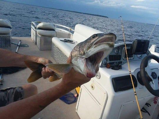 口が2つある魚に関連した画像-03