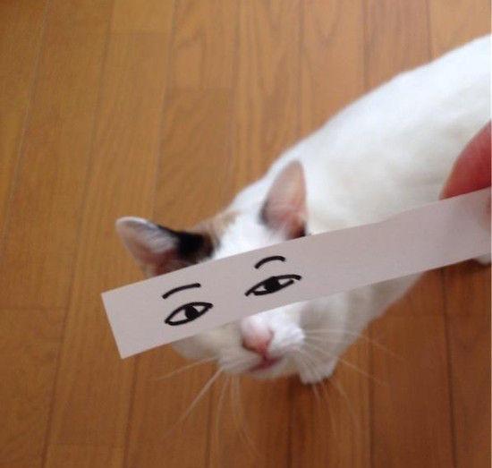 猫モンタージュに関連した画像-02